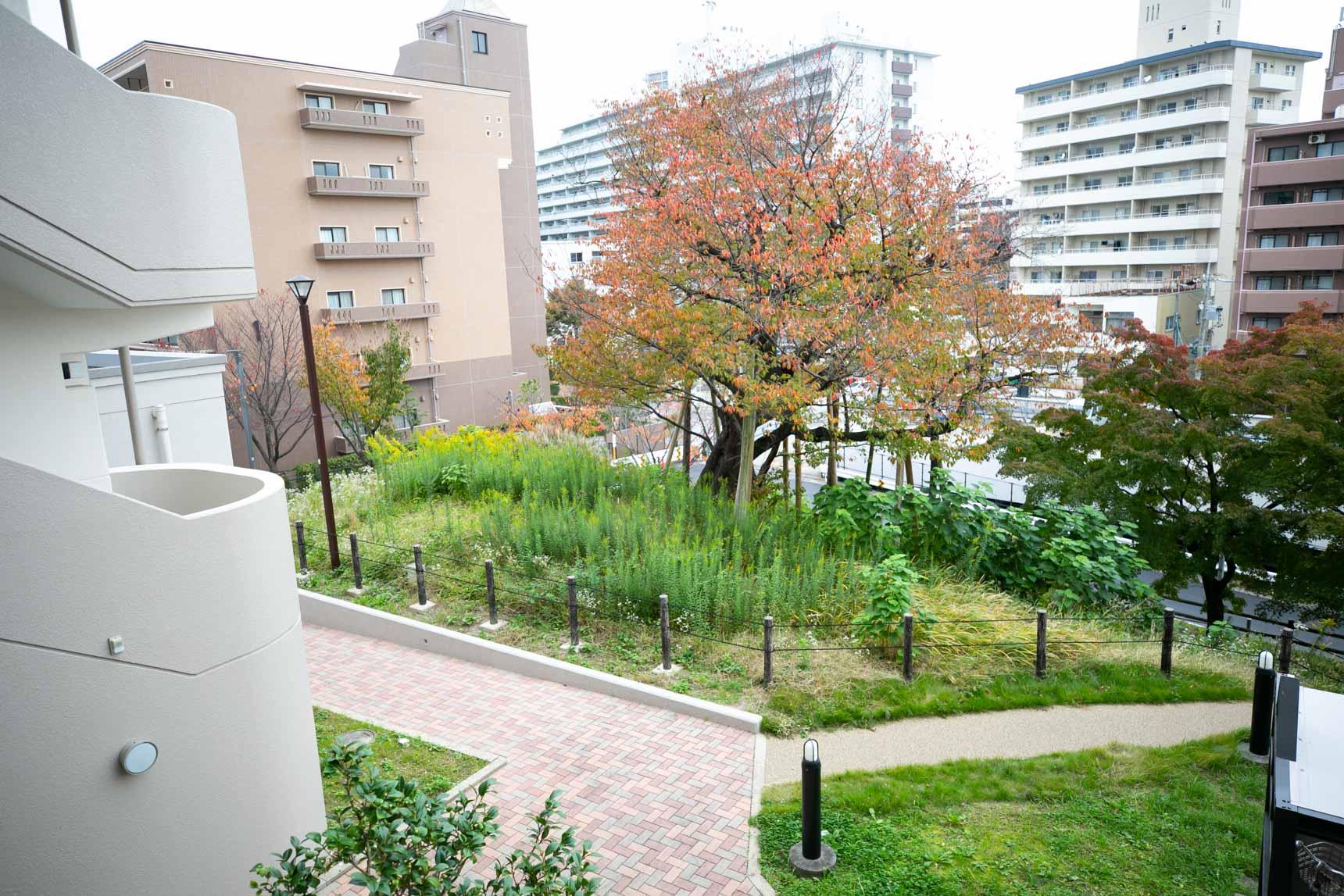 お部屋の目の前には、団地のシンボルとなる桜の木が生えていました。四季の移ろいを毎日感じられますね。