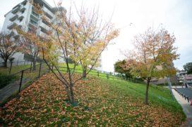 ショッピングも、自然も徒歩圏内で楽しめる星ヶ丘。思わず羨ましくなる「アーバンラフレ虹ヶ丘西」の暮らし方