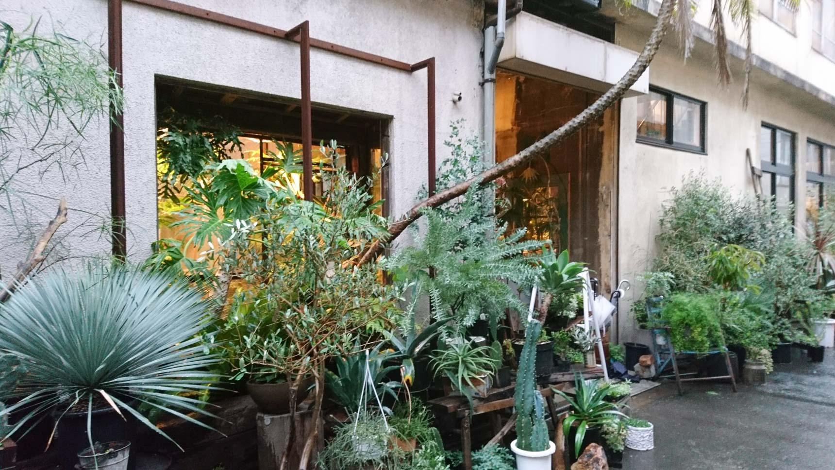 入り口には植物がモッサモサ。