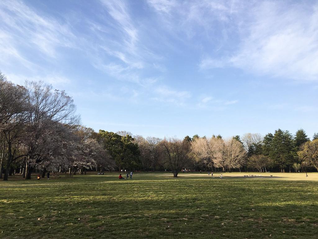 とにかく広くて、子どももたくさん走り回っている公園でした!