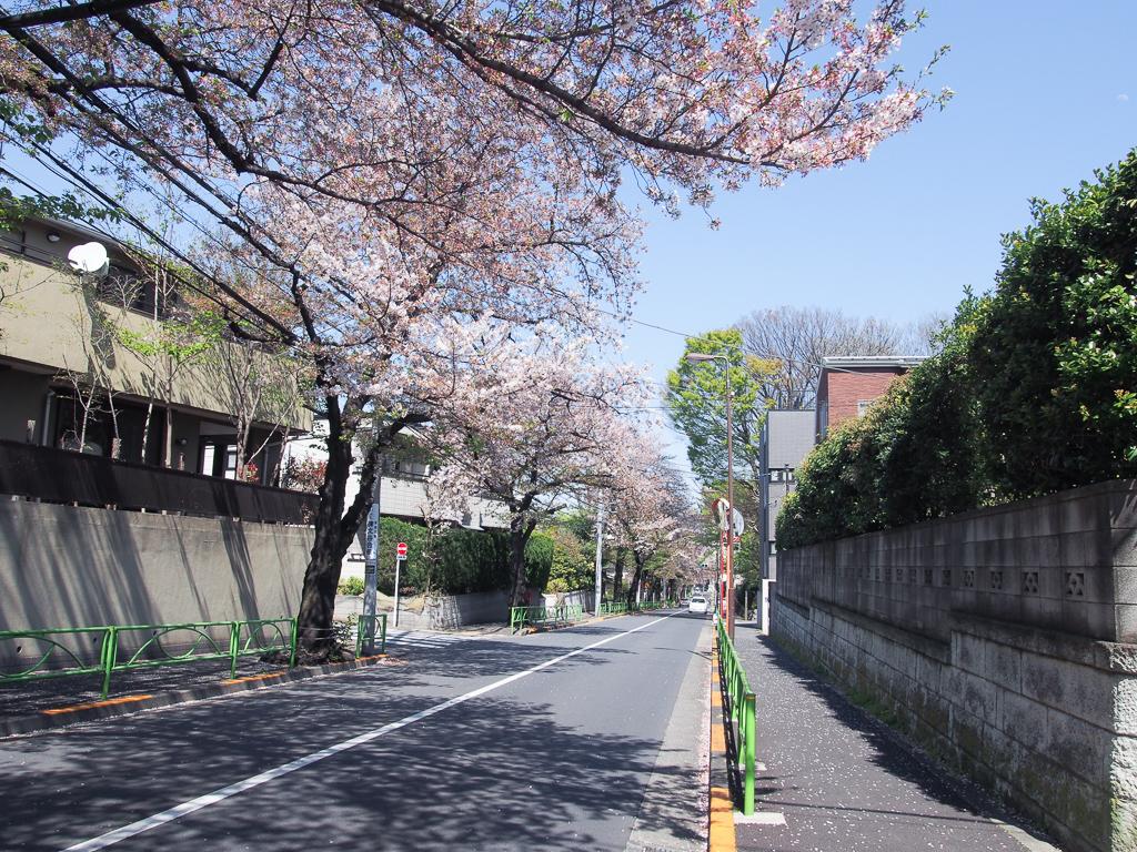この日はまだ桜が咲いていました。
