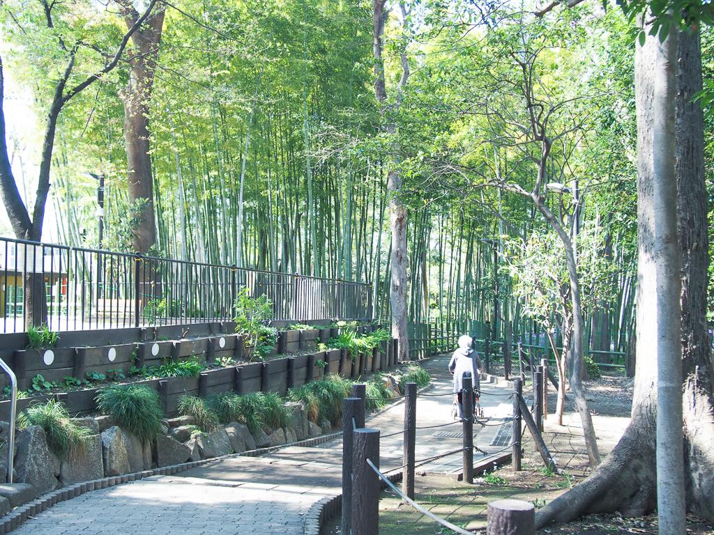 竹林の広がる静かな公園。こちらの記事で詳しく紹介しています