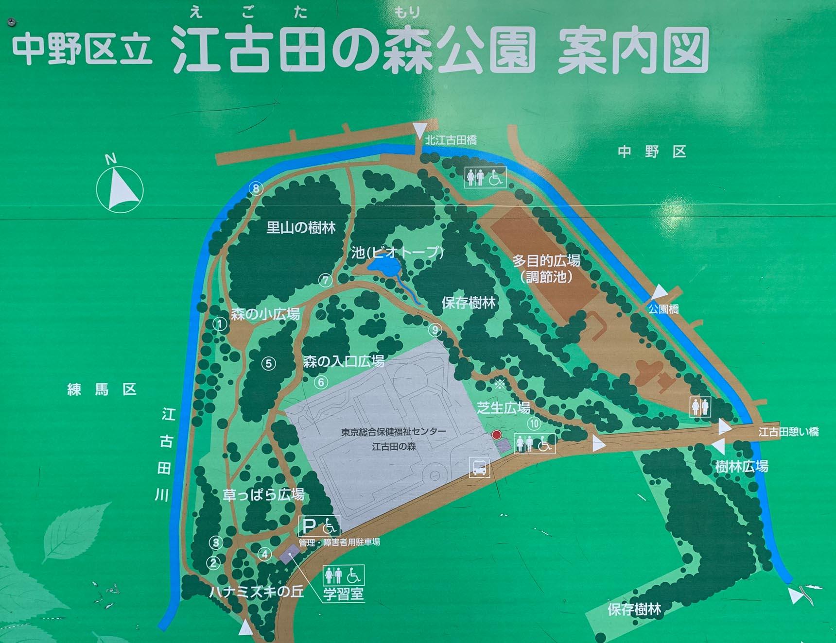 新宿までは大江戸線でわずか15分の新江古田。こんなところに、こんなに大きな樹林が残っていたなんて、知りませんでした。