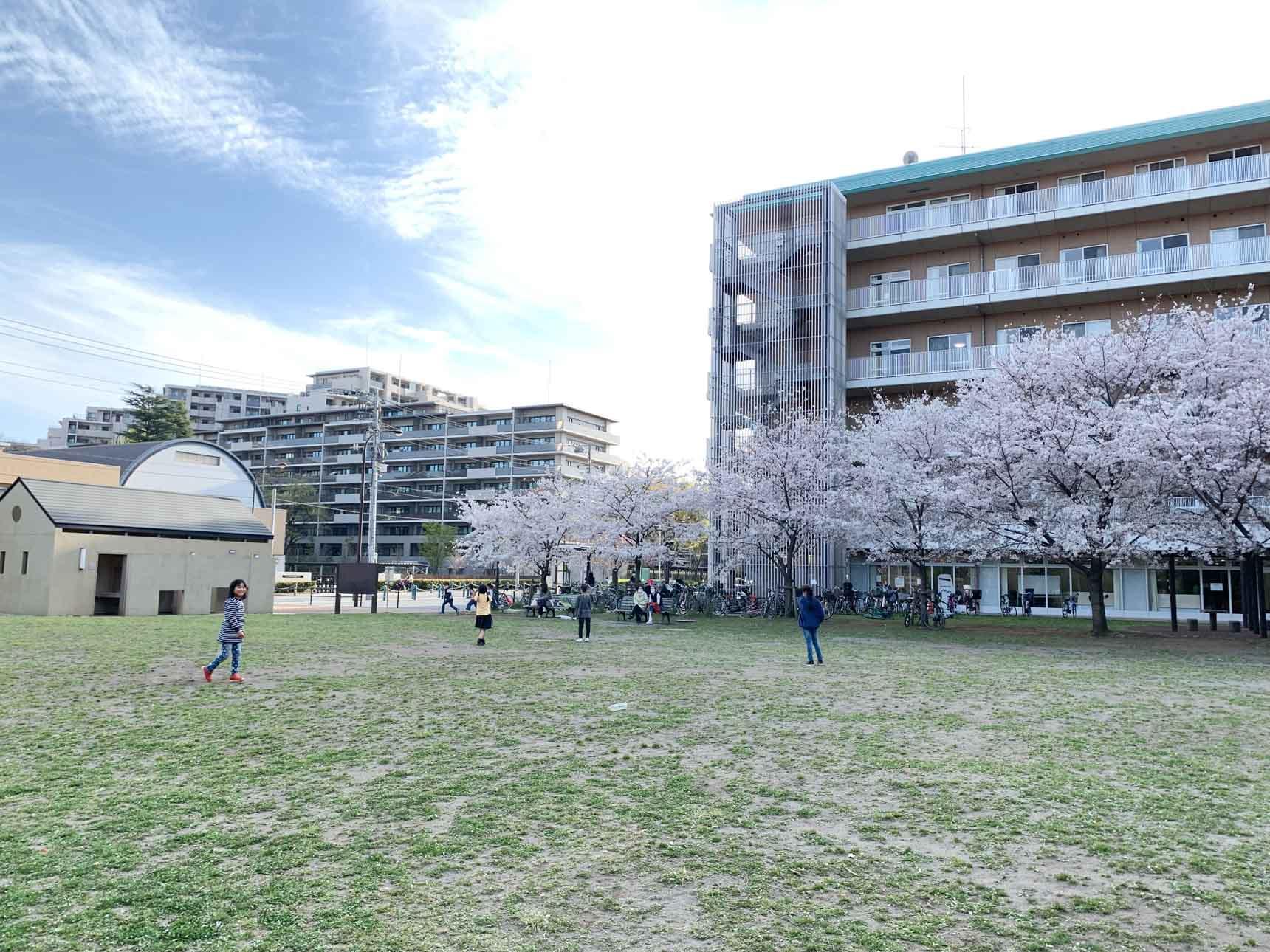 取材時、芝生広場は桜が満開。たくさんの親子連れで賑わっていました。