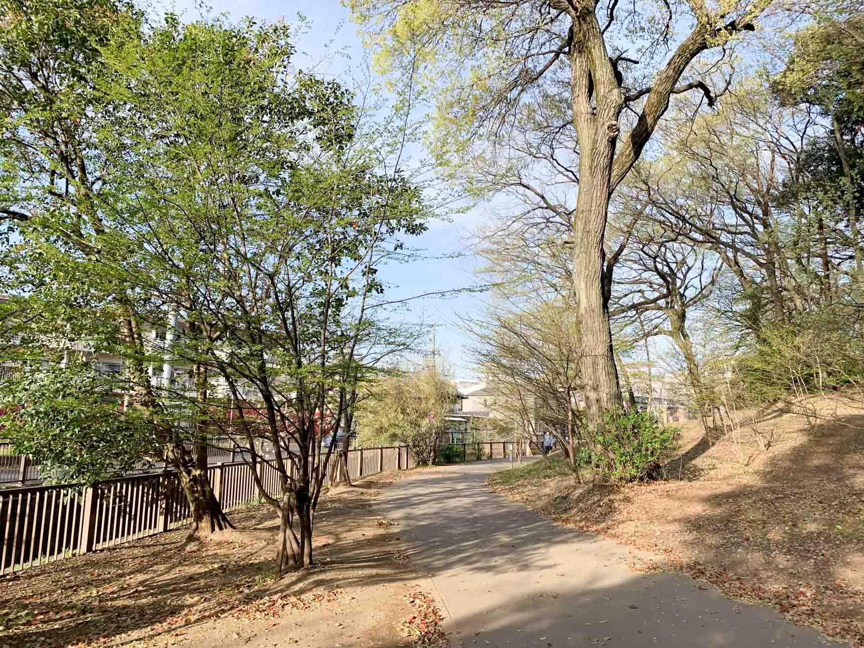 新江古田駅から南へと歩いていくと、江古田川に囲まれてたくさんの大きな樹々が残された公園、「江古田の森公園」があります。