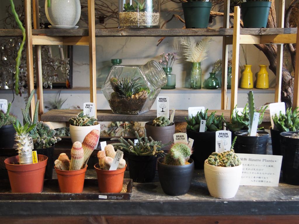あまり他の店で見られない品種を多数そろえる花屋「ブリキのジョーロ」