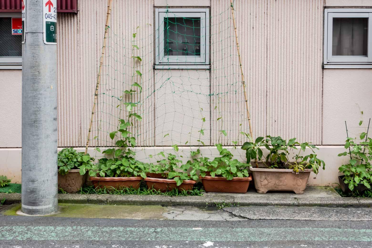 育ち盛りの園芸ゾーン。夏がくるのが楽しみです