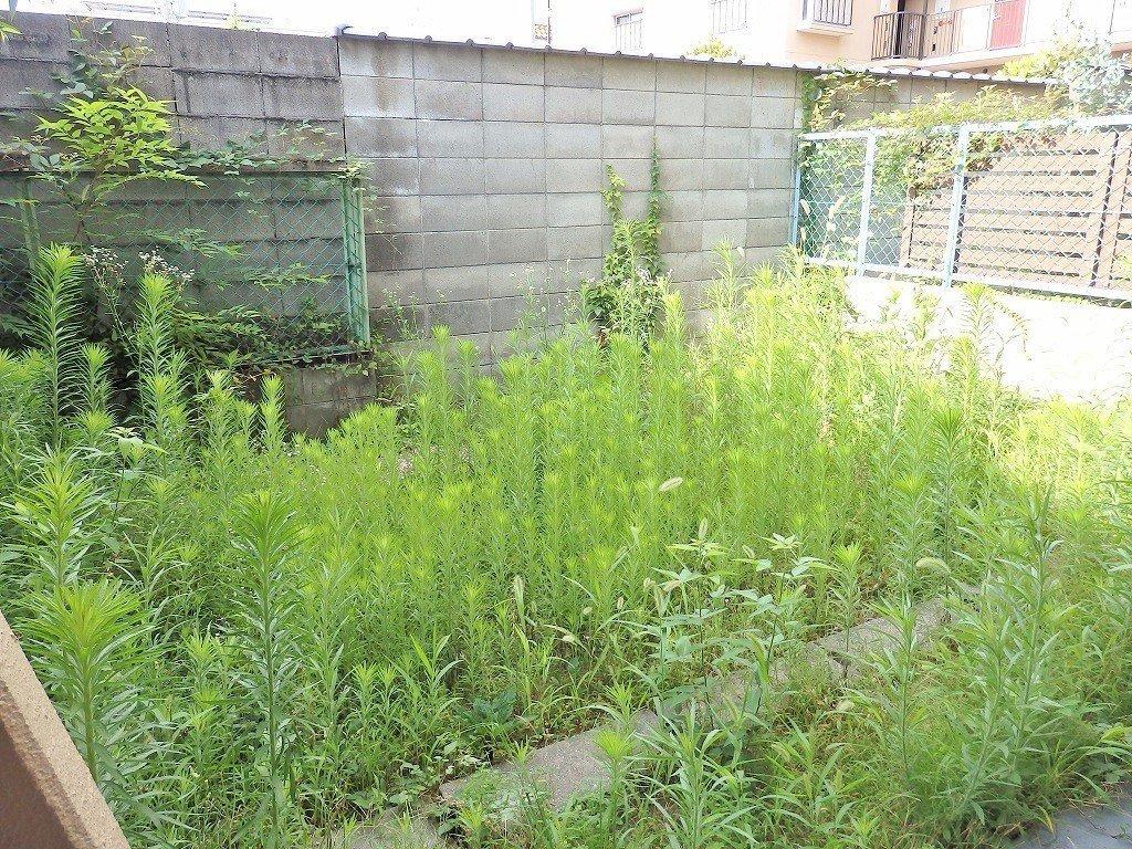 そしてこちらのお部屋のポイントは、広い専用庭がついているということ!写真では草が生い茂っていますが、お手入れもして下さるそうです!ガーデニングや家庭菜園で、休日をほっこり楽しむのもいいですね。