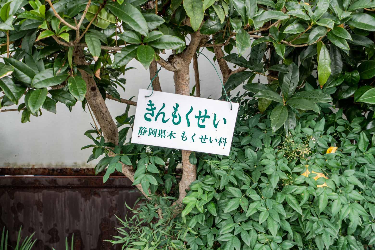 きんもくせいが植えられています。秋にまた来たいな。