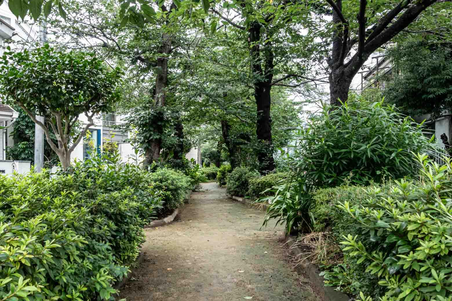 緑道が多いのがこのエリアの特徴。休日にはお散歩を楽しみたいところです。