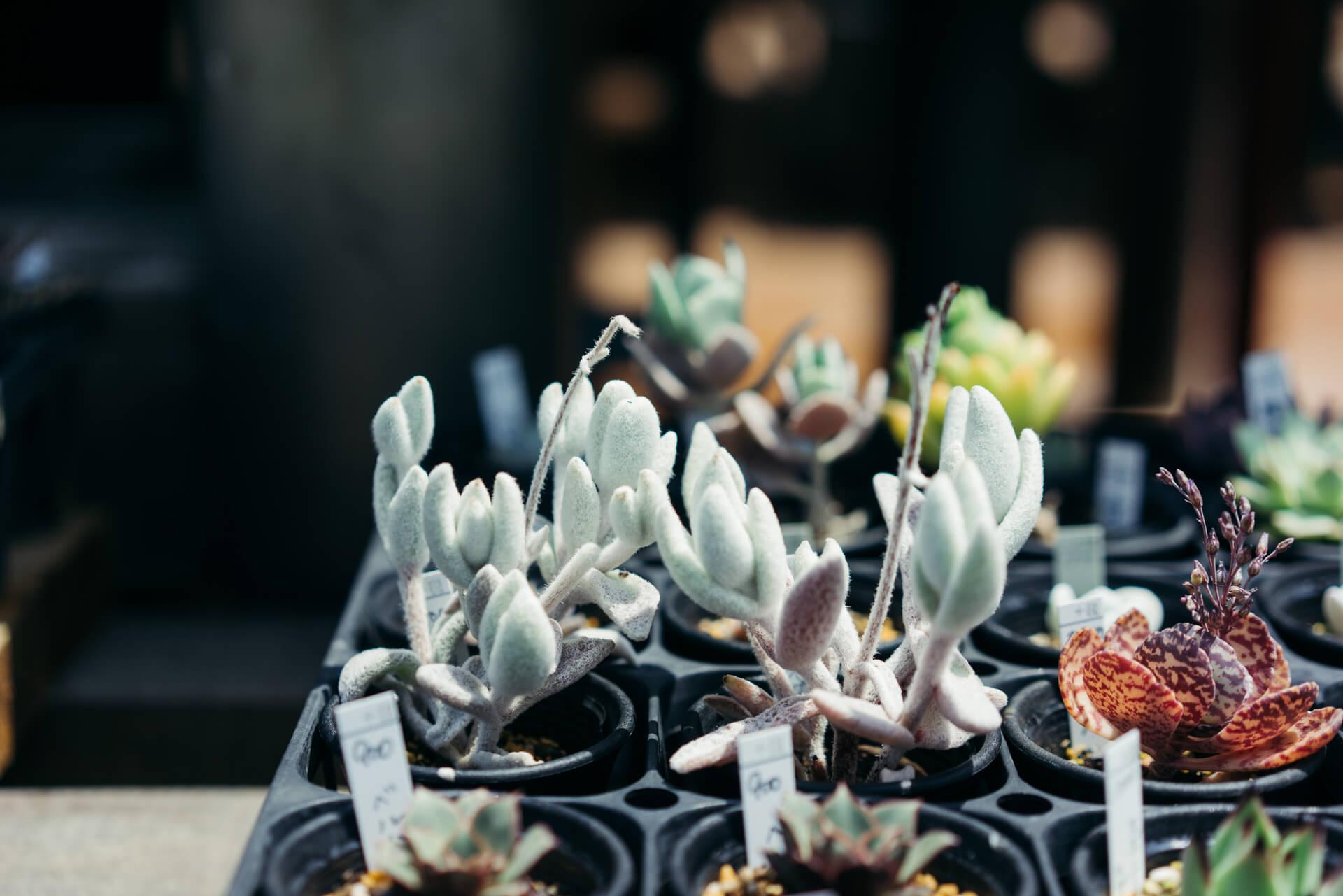 人気の多肉植物やサボテンも、日光が大好き。1年を通して、しっかり光を当てて育てると、春には花も咲きます。(このお店はこちら)