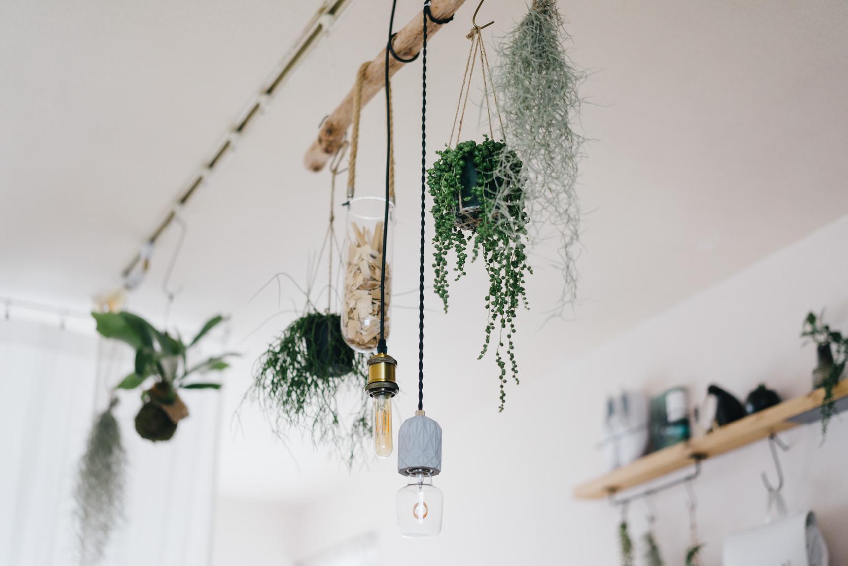 ライティングレールは雰囲気のある照明を好きにつけられるだけでなく、こんな風にフックを使って植物を引っ掛けたり、あると便利な設備です(このお部屋はこちら)