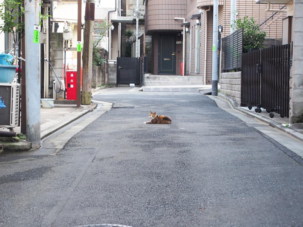 一本路地を入れば、猫ものんびりする住宅街が広がります。