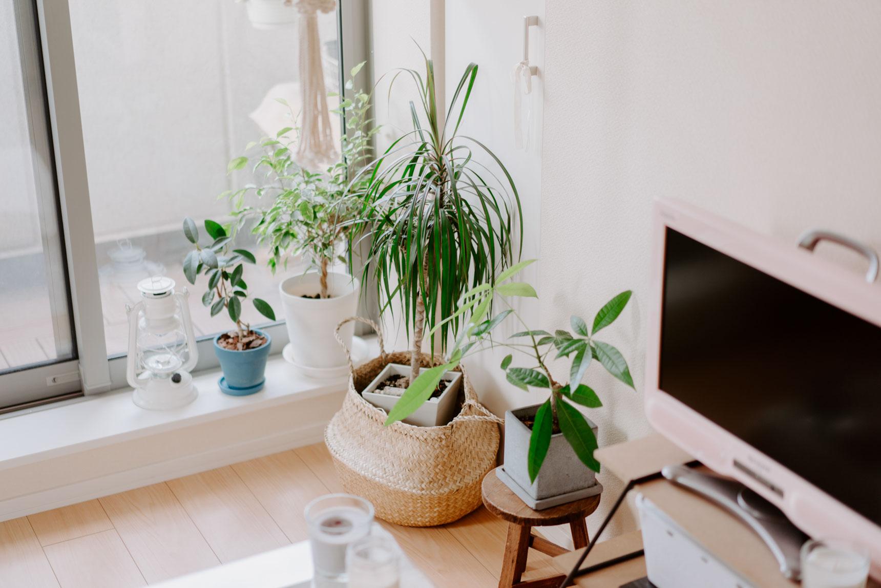 窓側の特等席は植物のための空間。リゾートインテリアに植物は欠かせないアイテムということがよくわかります。