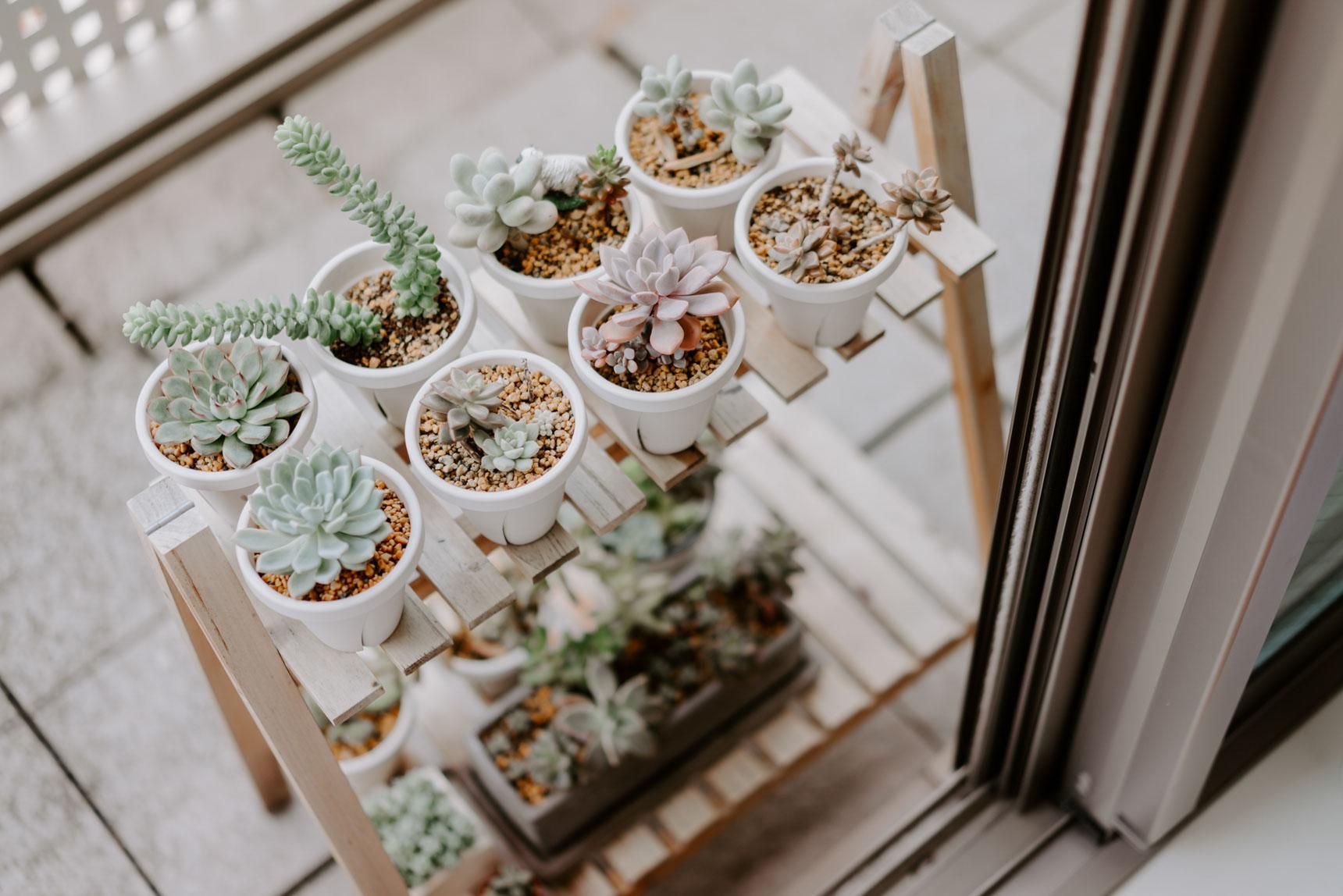 一人暮らしで家をあけることも多いため、室内の大きめのグリーンはほとんどフェイクグリーン。ただしベランダにはどんどん増えているという多肉植物のコレクションがありました。可愛い!