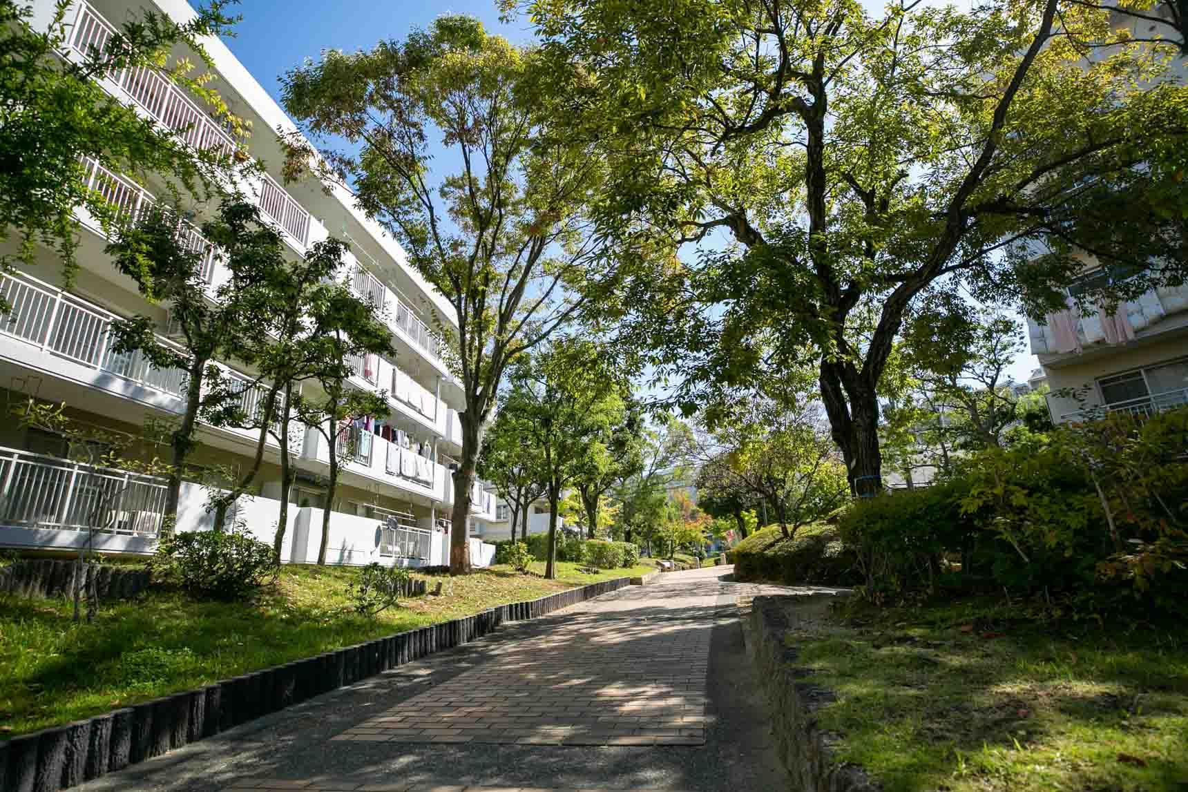 団地の敷地内も、街並みと調和するような、並木道が続きます。