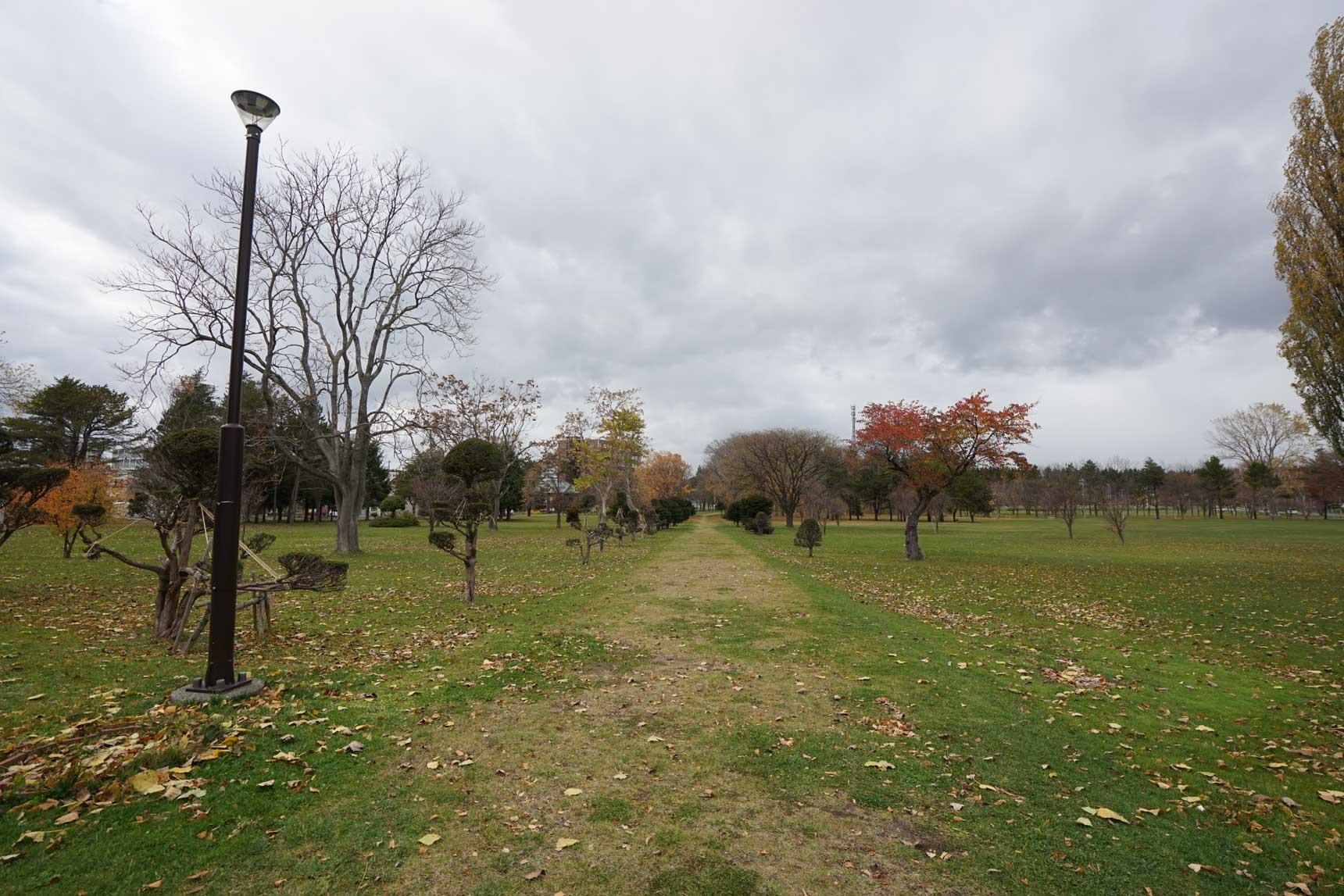 図書館の目の前にはとても広い芝生の公園が広がります。よく遠足で幼稚園や小学校の子どもたちも多く訪れるんだそう。