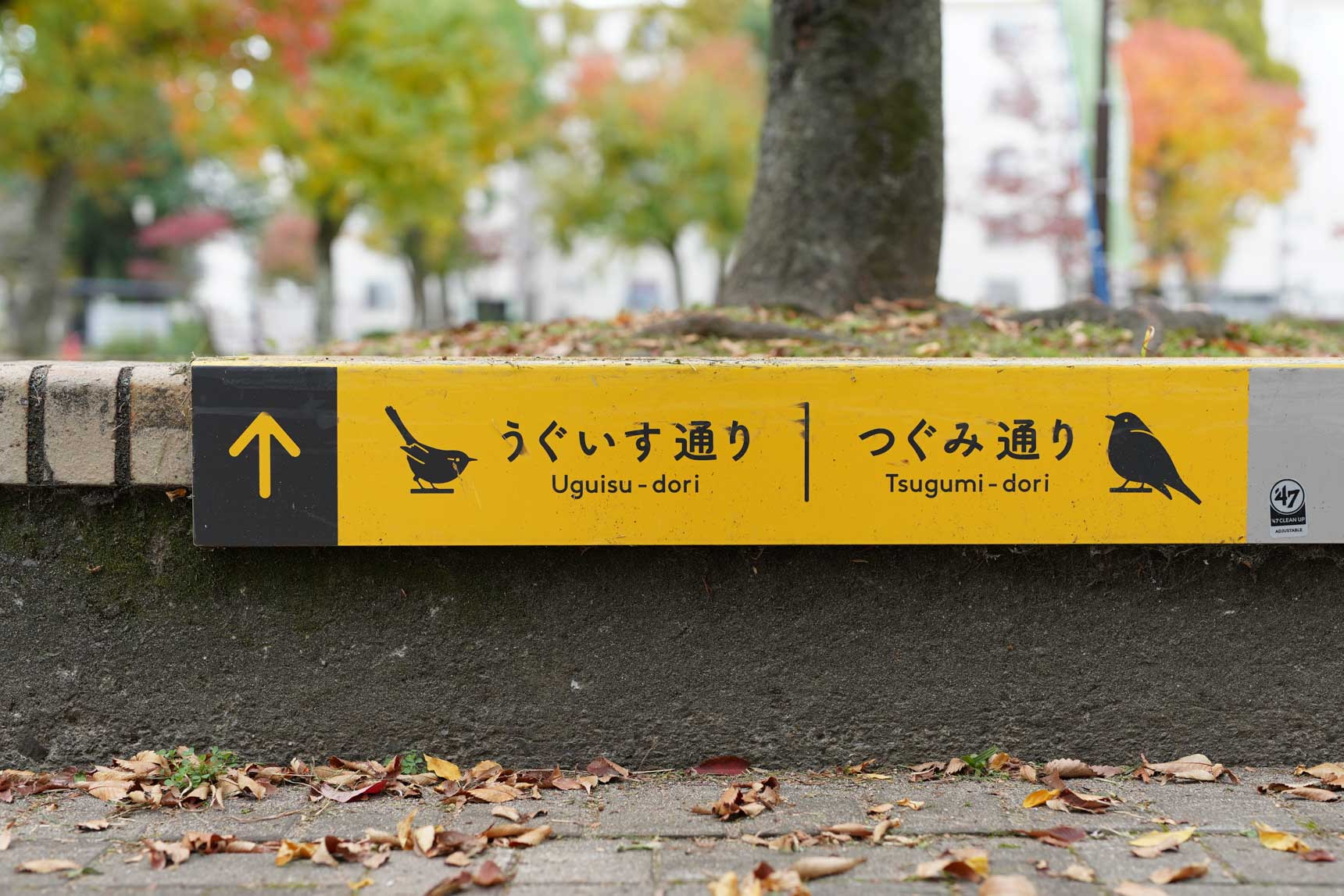 敷地内に棲む鳥たちにちなみ、「うぐいす通り」「つぐみ通り」「めじろ通り」の3つの名前がついています。