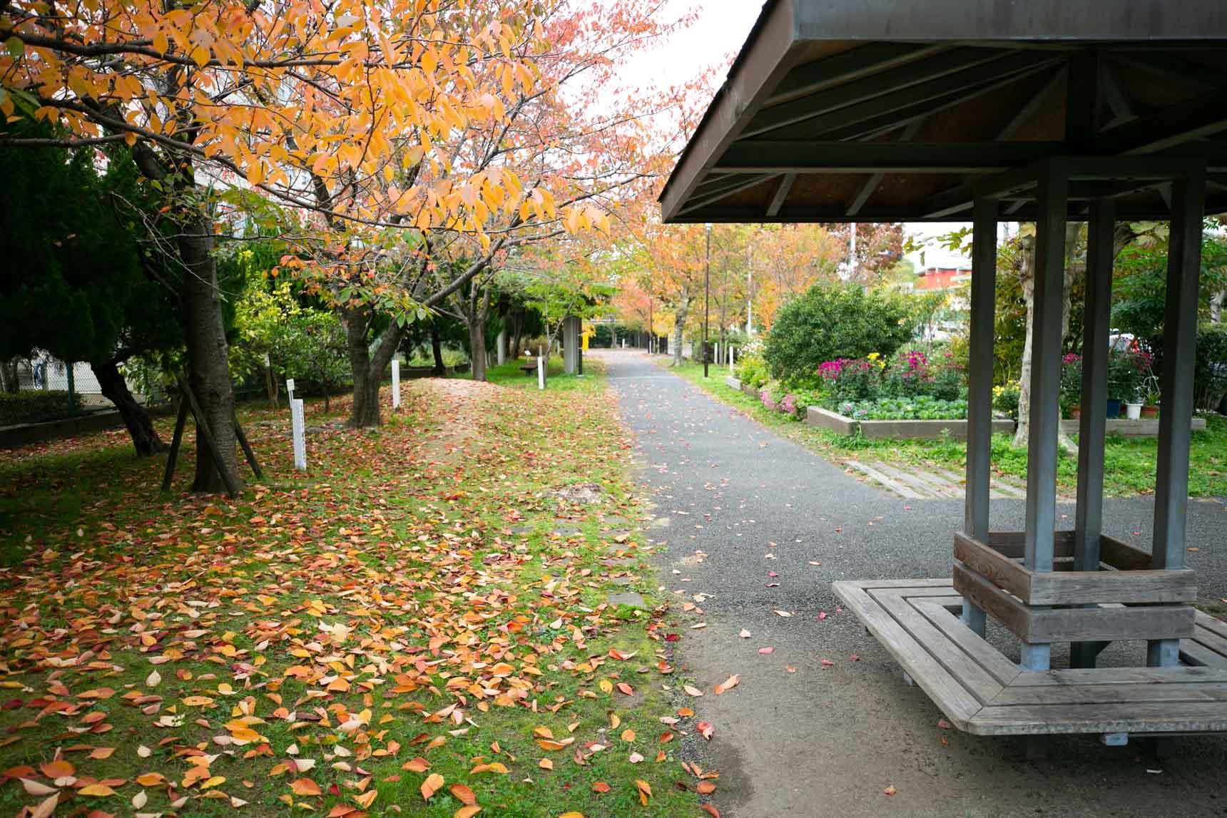 訪れたのは、ちょうど紅葉のシーズン。樹々が色づいてとても綺麗でした。