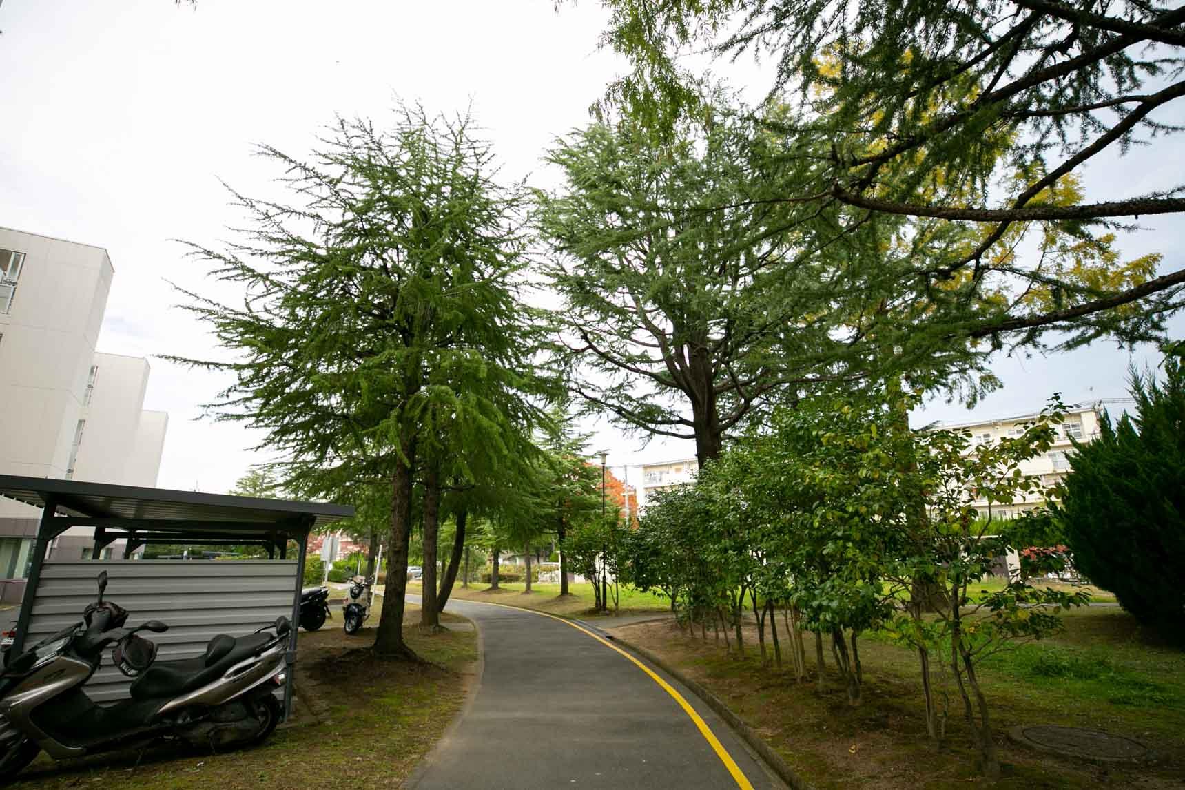 木々の種類も豊富。こちらはメタセコイアの木です。