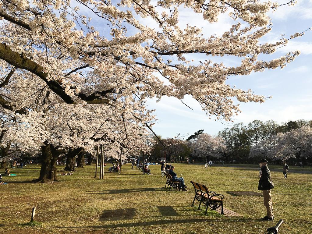 都立公園の中でも最大規模の広さを誇る「小金井公園」