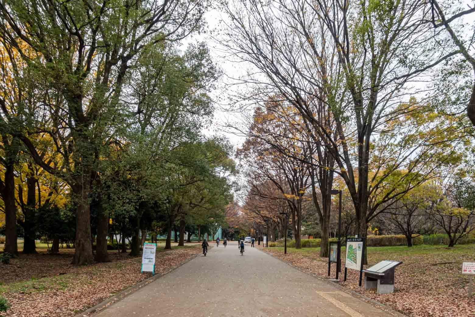 砧公園に到着! 空気が清々しいですねえ。桜の名所としても知られていて、シーズンになると多数の花見客で賑わうそうですよ。
