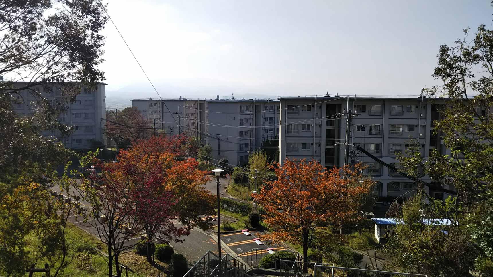 丘陵地にたつ団地。敷地内もゆとりある住棟配置で、大きく成長した樹々に囲まれた、豊かな住環境がありました。