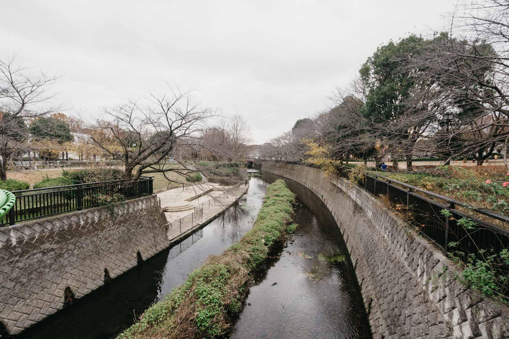 公園内には仙川が流れていて、両側には桜の木が。お花見の名所としても知られています。