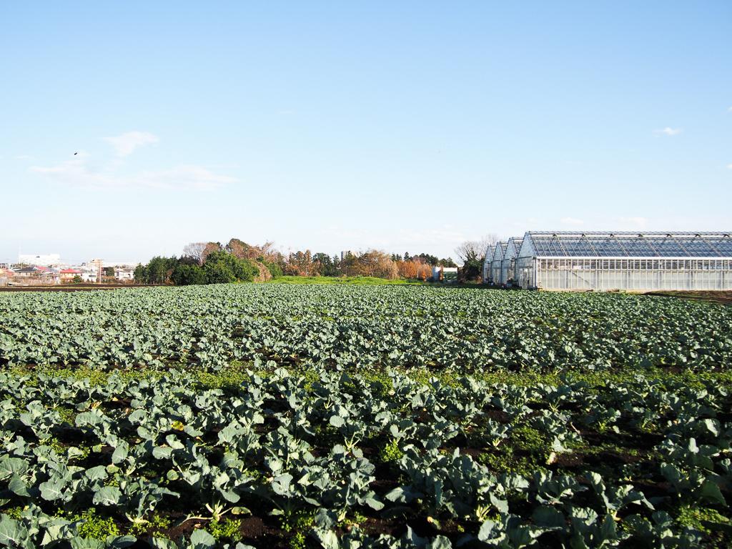藤沢市内にある畑。