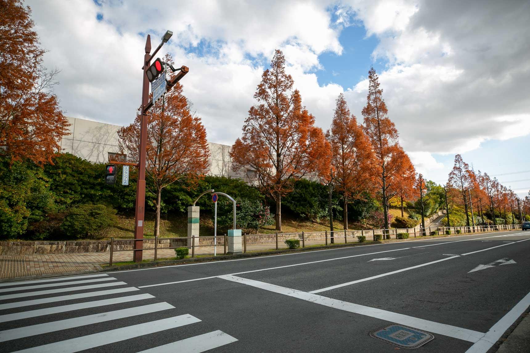ゆったりとつくられているニュータウン内の街路。街路樹がとても立派で、綺麗ですね。