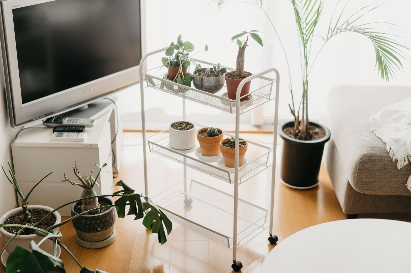 小さな鉢植えはIKEAのサイドラックにまとめて。キャスターがついているので日当たりの良い場所に移動するのも楽々。