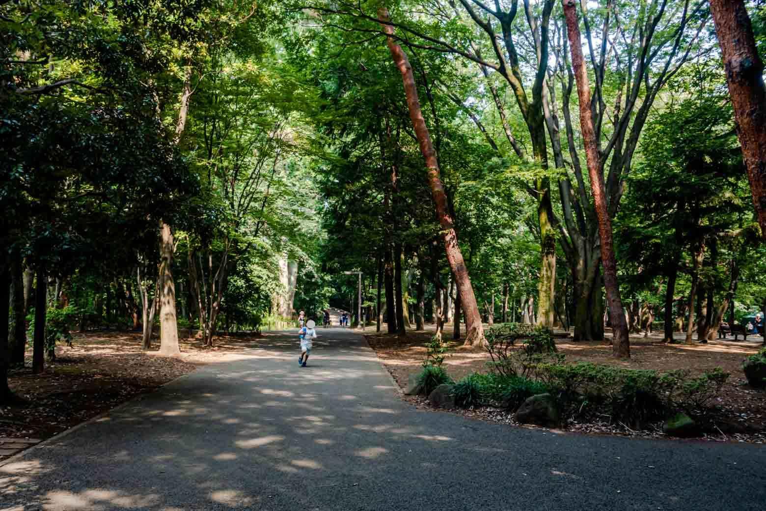 都会の中にこんな場所が!と驚くほど自然豊かな公園、「林試の森公園」