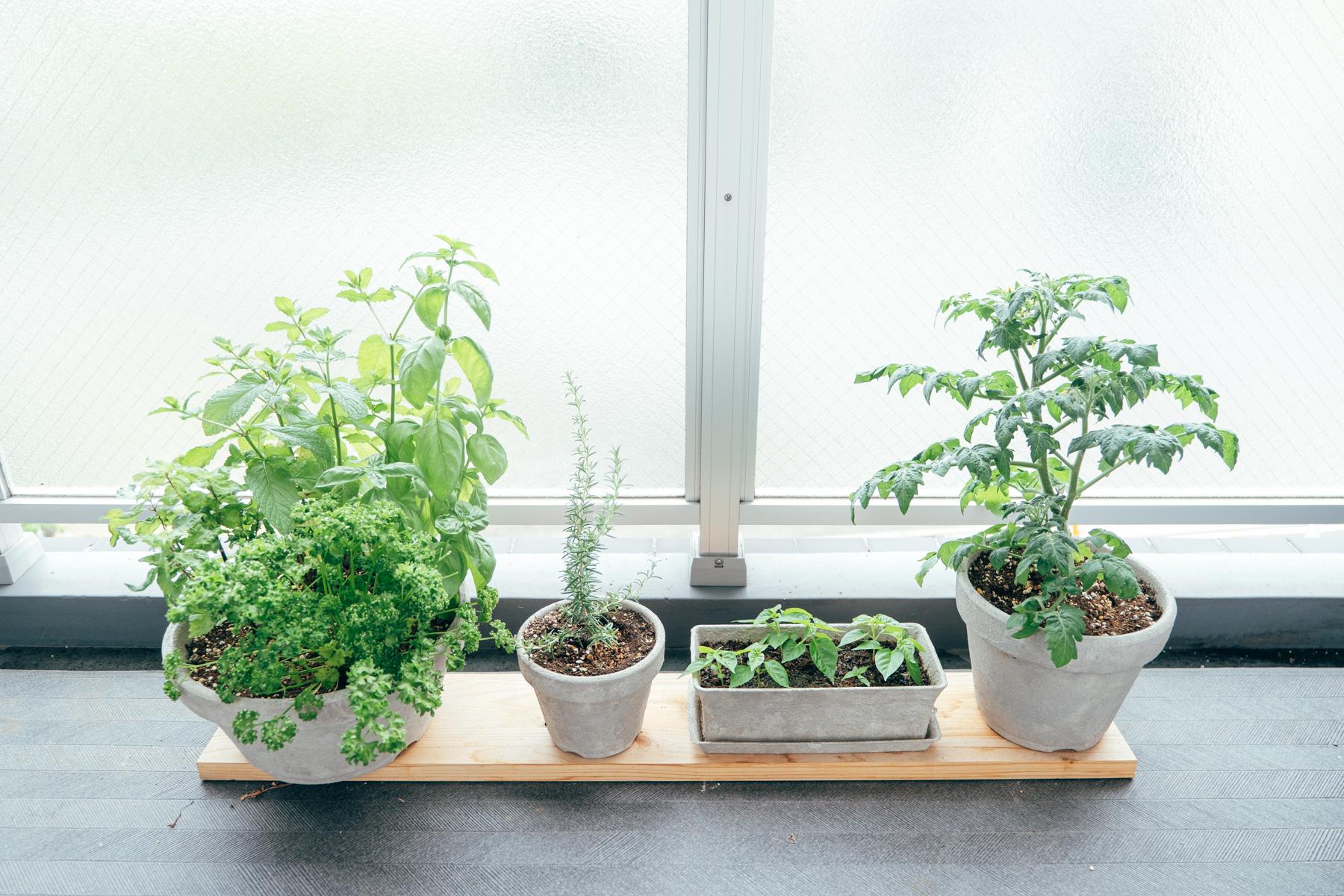 ベランダに作り始めた家庭菜園スペース。こちらはモルタル風に、ハナモリさんが塗られたものでした。統一感があって、これだけでもお洒落に見えます。