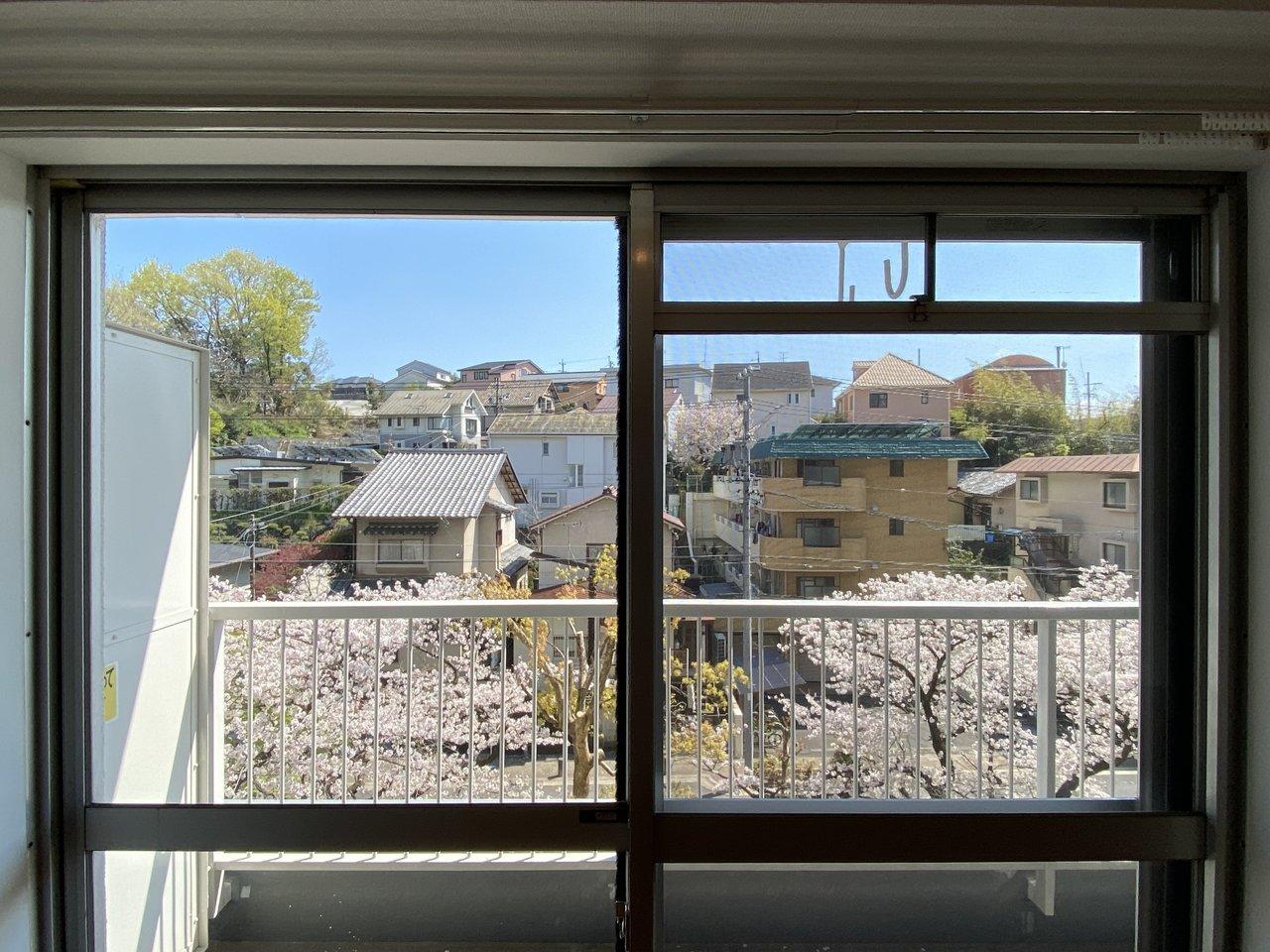 リビングにある窓からは、春になると桜も見ることができます。毎年春が待ち遠しくなりそうです。
