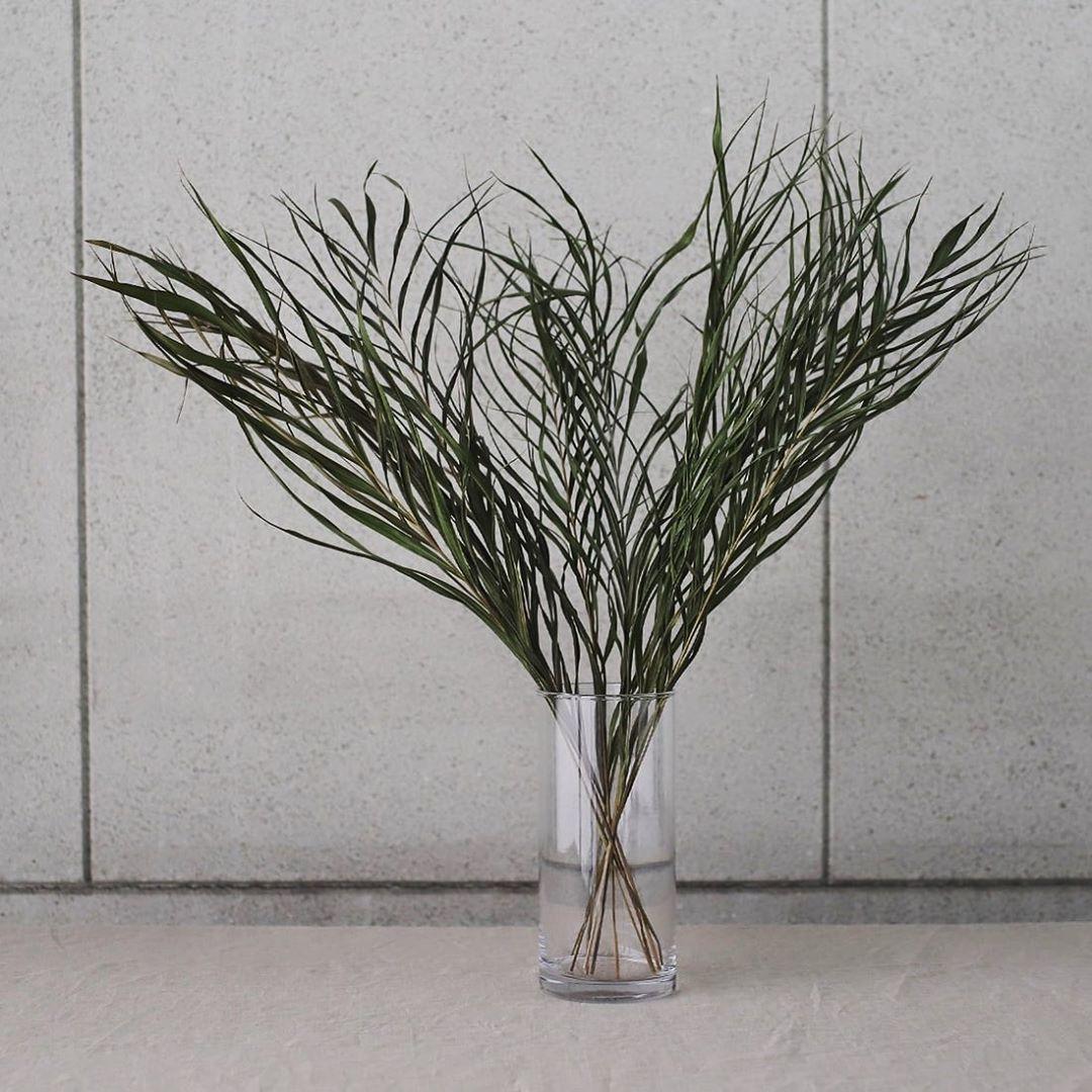 オフィスの室内などで観葉植物としても人気のアレカヤシ。「ヤシ」という名の付く通り、生の状態では南国のイメージが強く、フレッシュな見た目。ドライになると水分が抜けることで、やや落ち着いた印象の新たな表情を見せてくれます。