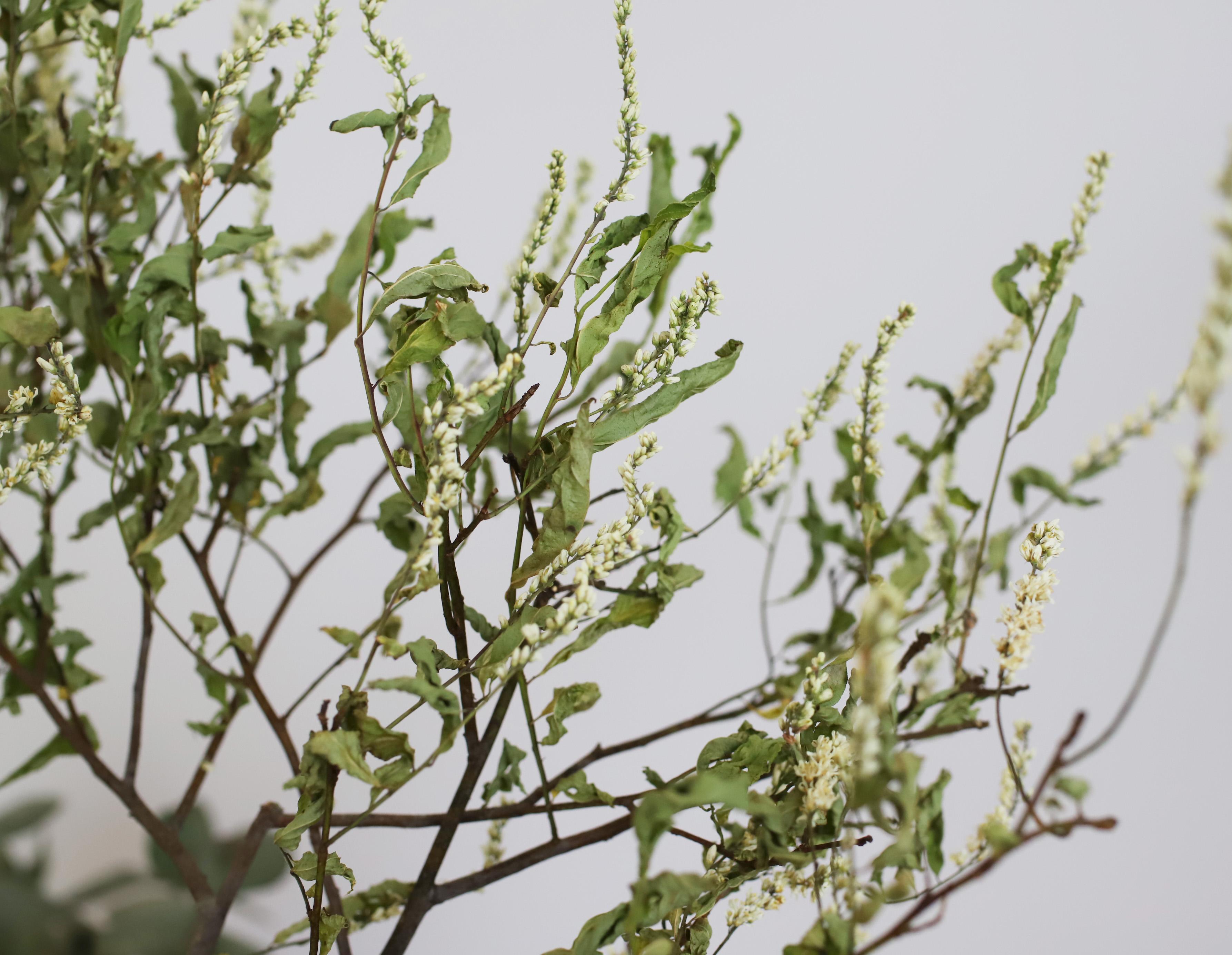 瑞々しさはなくなりますがドライならではの面白さがあります。色や花もそのまま残りやすいのが特徴です。