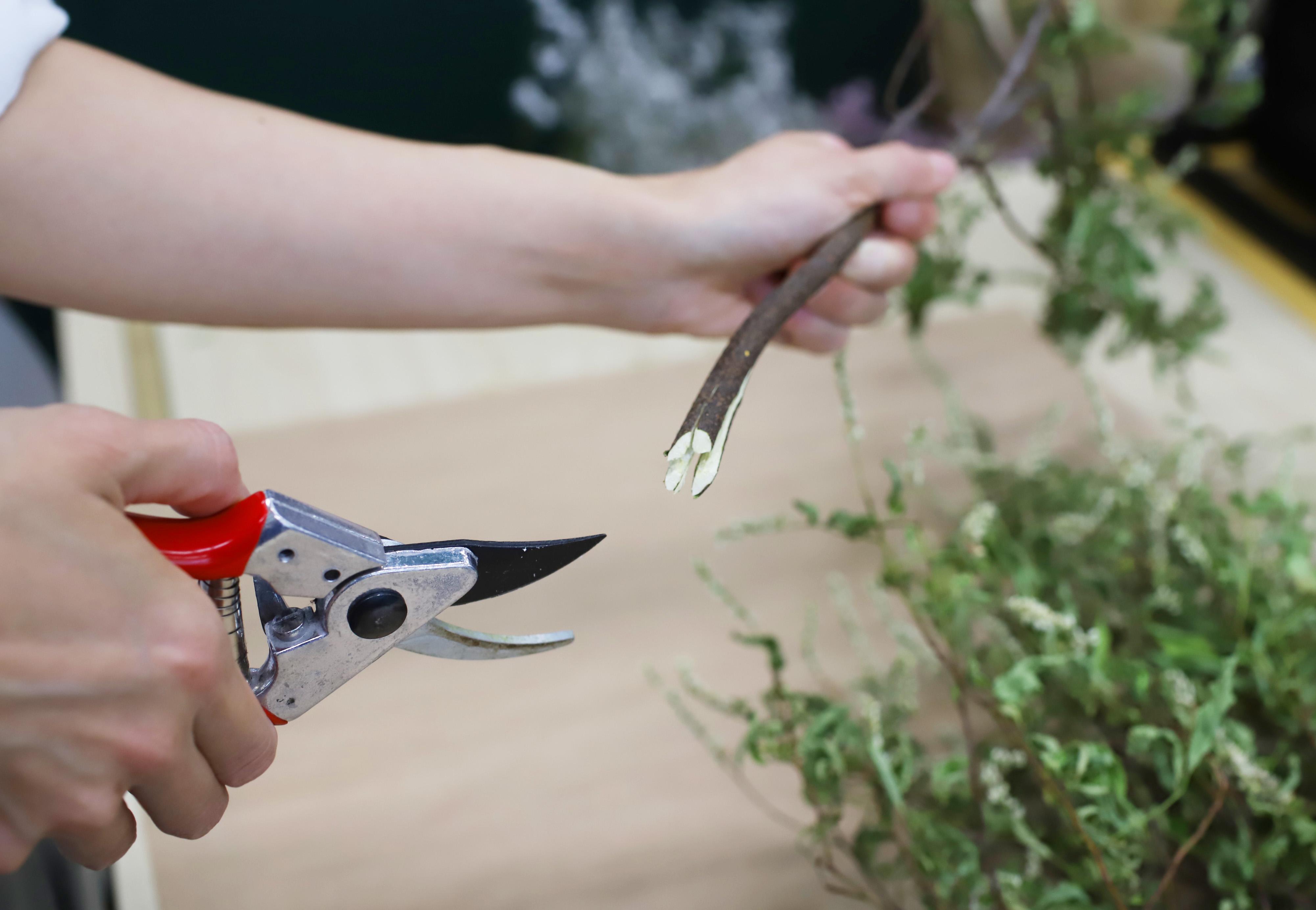 枝の根元(3~5cm程度)を十文字に割ったり、ハンマーで叩くなどして繊維をほぐしてあげることで、吸水面が広がりますよ。