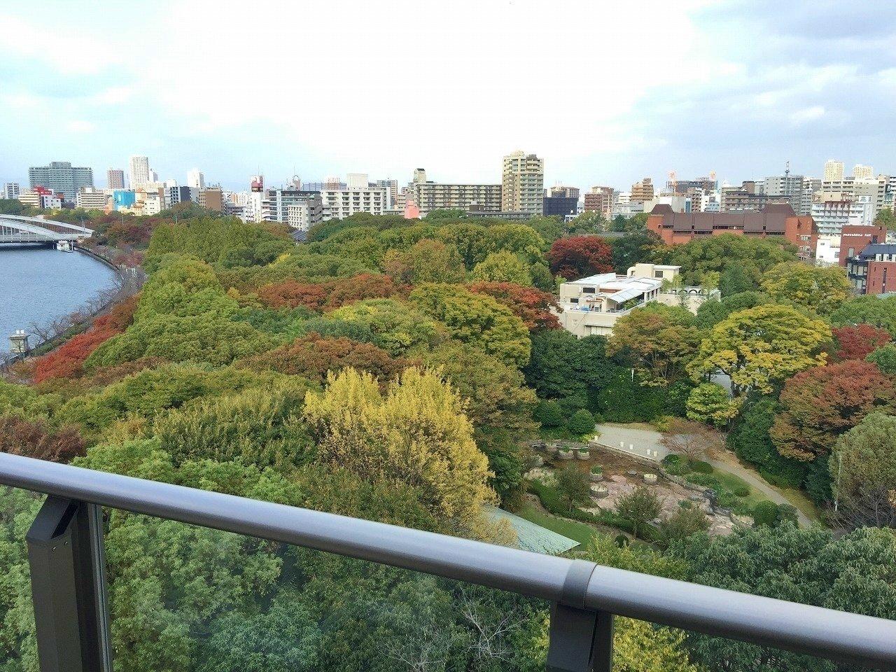 秋には紅葉も愉しめる、藤田邸跡公園が一望できますよ。