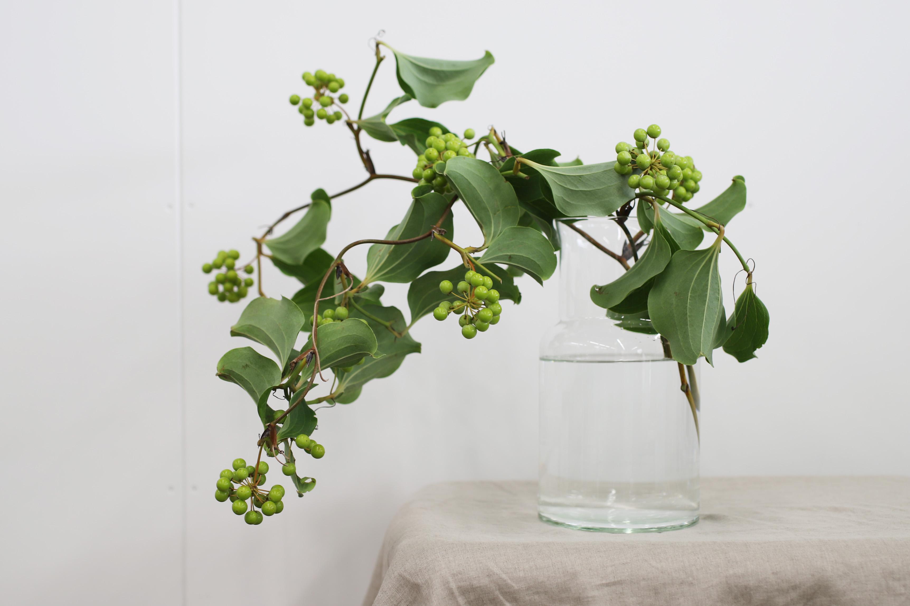 山に入った病人がこれを食べ、元気に回復して戻ってきたことから山帰来(サンキライ)という俗称がつきました。サンキライといえばクリスマスの赤い実のイメージがありますが、実は夏もおすすめ。つやっとした緑色の実が爽やかで、暑い夏に涼を運んでくれる植物の一つです。ツル性の植物なので自由に曲げることが出来るため、ぐるっとまるめてリースにすることも。