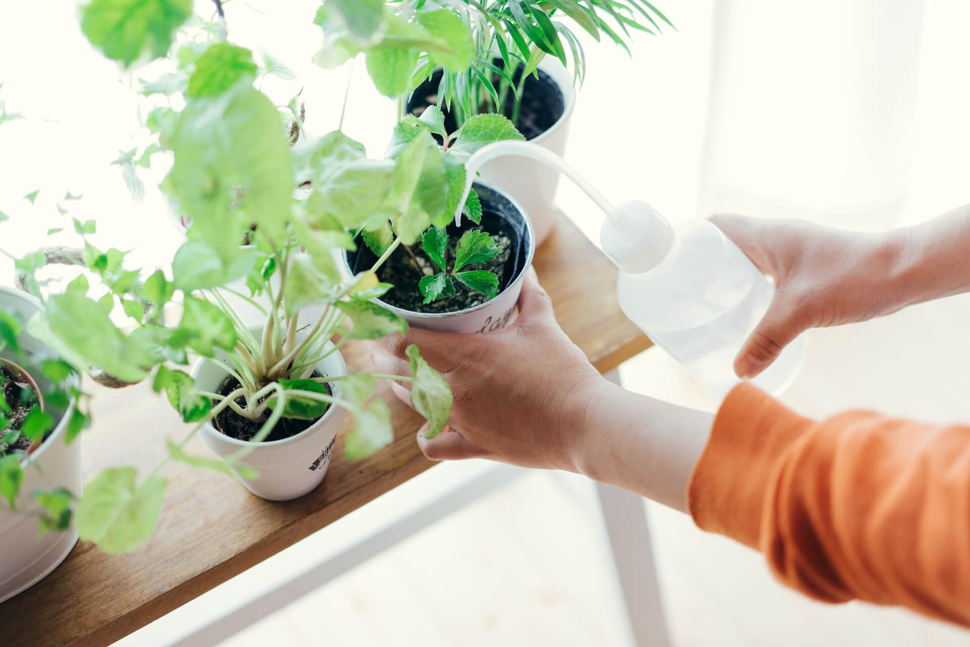 またはじめから大きなプランターを買うのが難しい、という方は、お花屋さんで売っている状態のまま、小さな鉢に入れて室内で育ててもOK。(このお部屋はこちら)