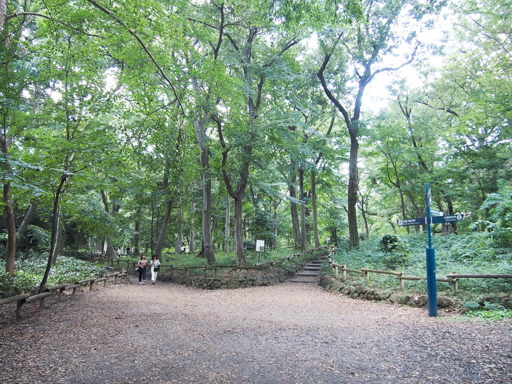 吉祥寺と三鷹の間にある、井の頭公園は誰もが知る、東京都内の人気公園のひとつ。まるでジブリの世界に迷い込んだかのようなうっそうと茂る木の中を歩いていると、ここが都内だということを忘れてしまいそうになります。(三鷹の街歩き記事はこちら)