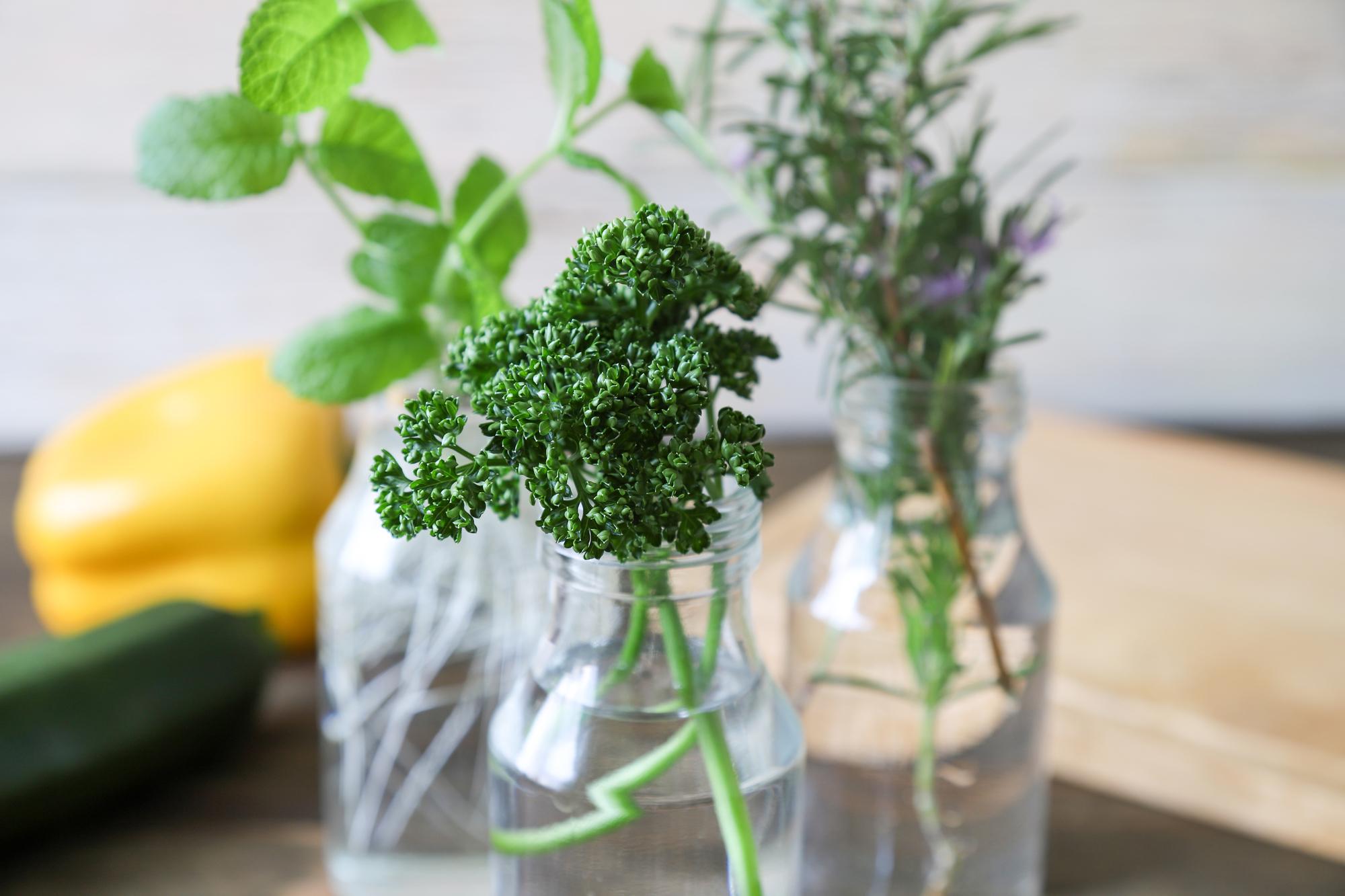 きれいな空き瓶やフラワーベースに水を張り、2、3節伸びた状態の茎を差しておきます。すると3~4日程度で少しずつ根が出てくるので、きちんと育っていることを感じることができますよ。