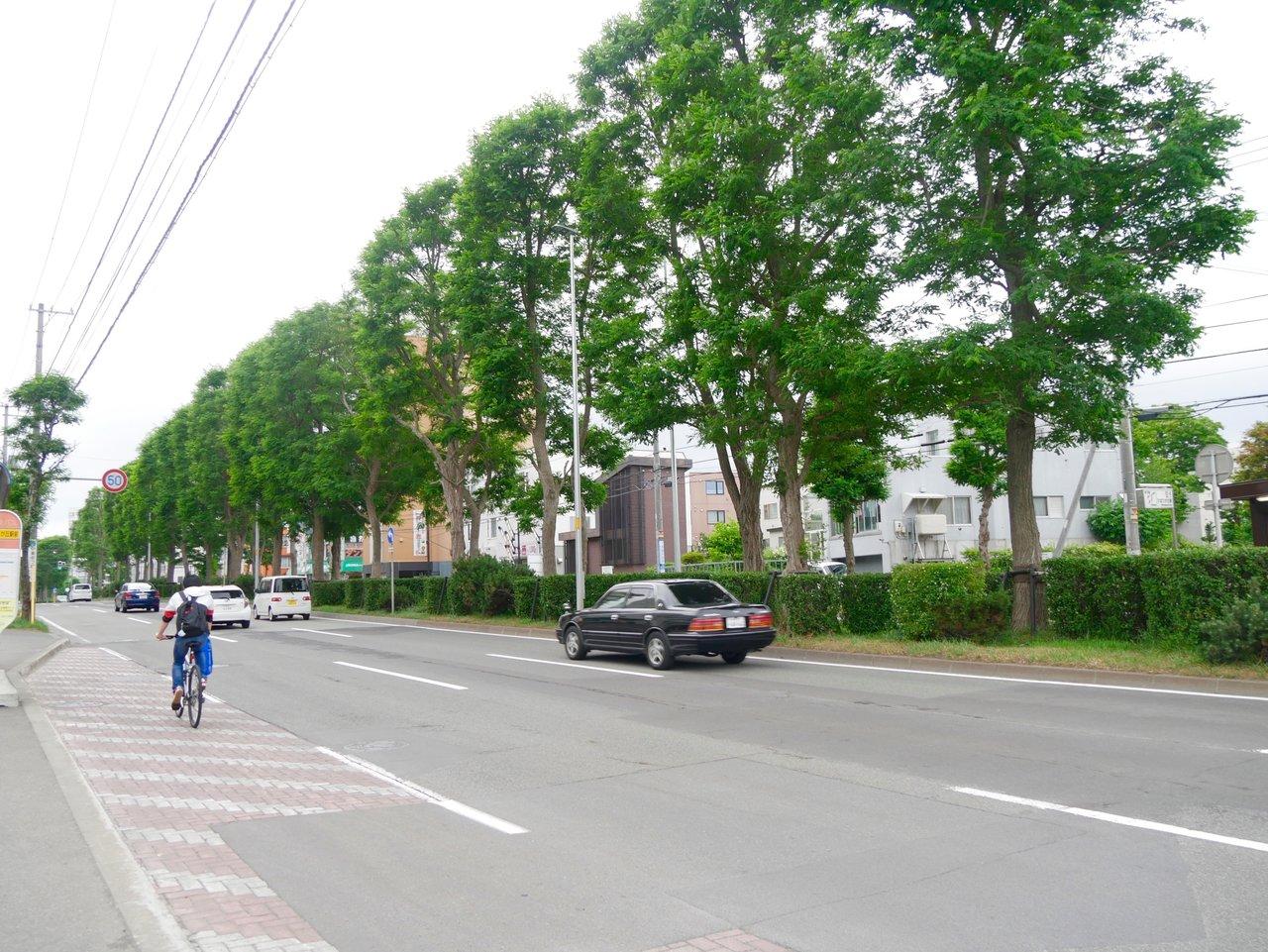 近所には並木道があって、散歩をしている人や自転車で駆け抜けていく人がたくさんいます。穏やかでのんびりとした暮らしが楽しめそうです。