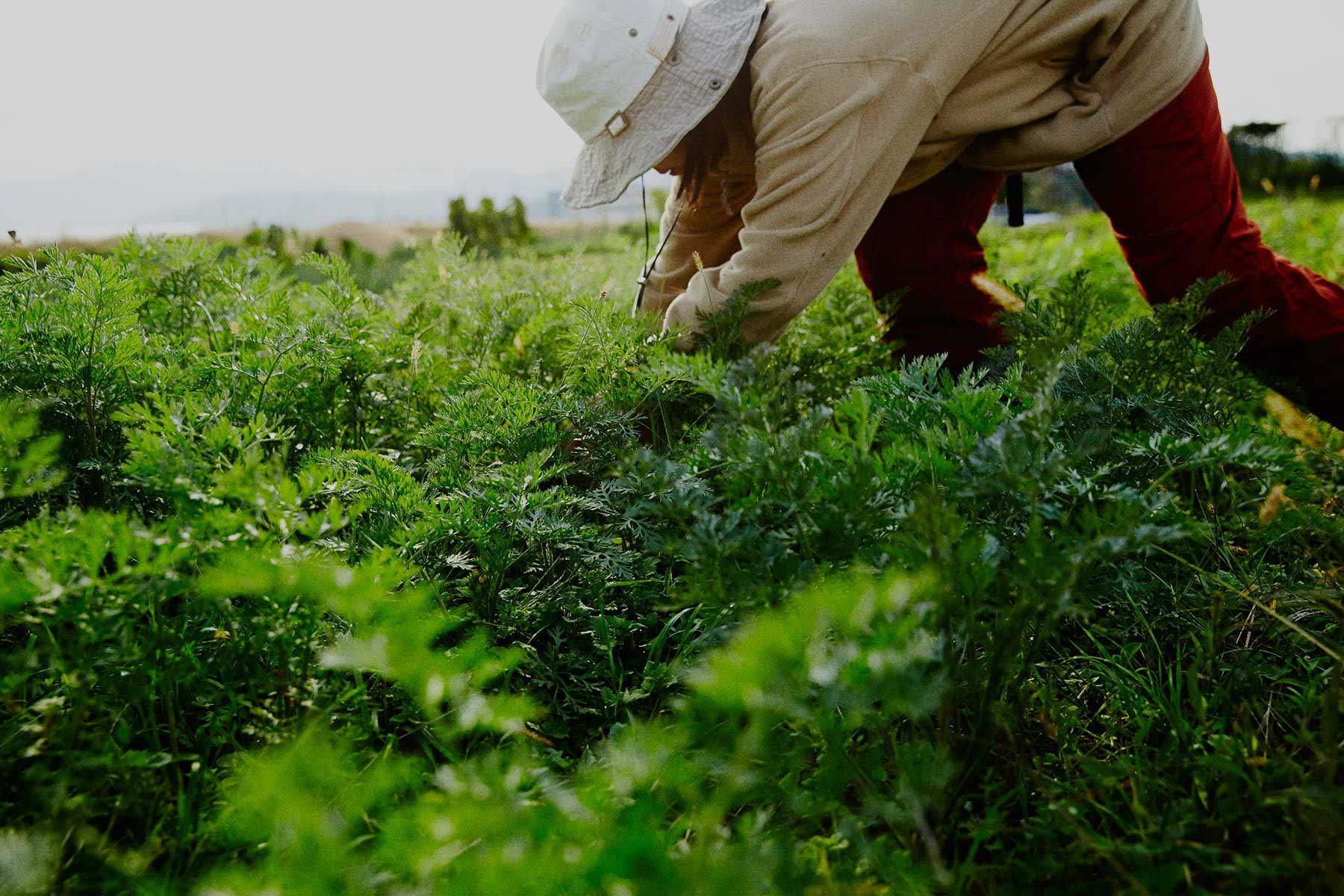 「野菜は生き物」。「坂ノ途中」の野菜定期宅配で、農業や環境のこと、ちょっと知ってみませんか?