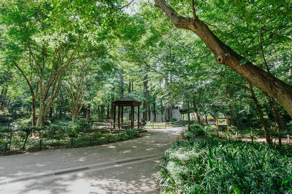 まさに都会のオアシス、林試の森公園。