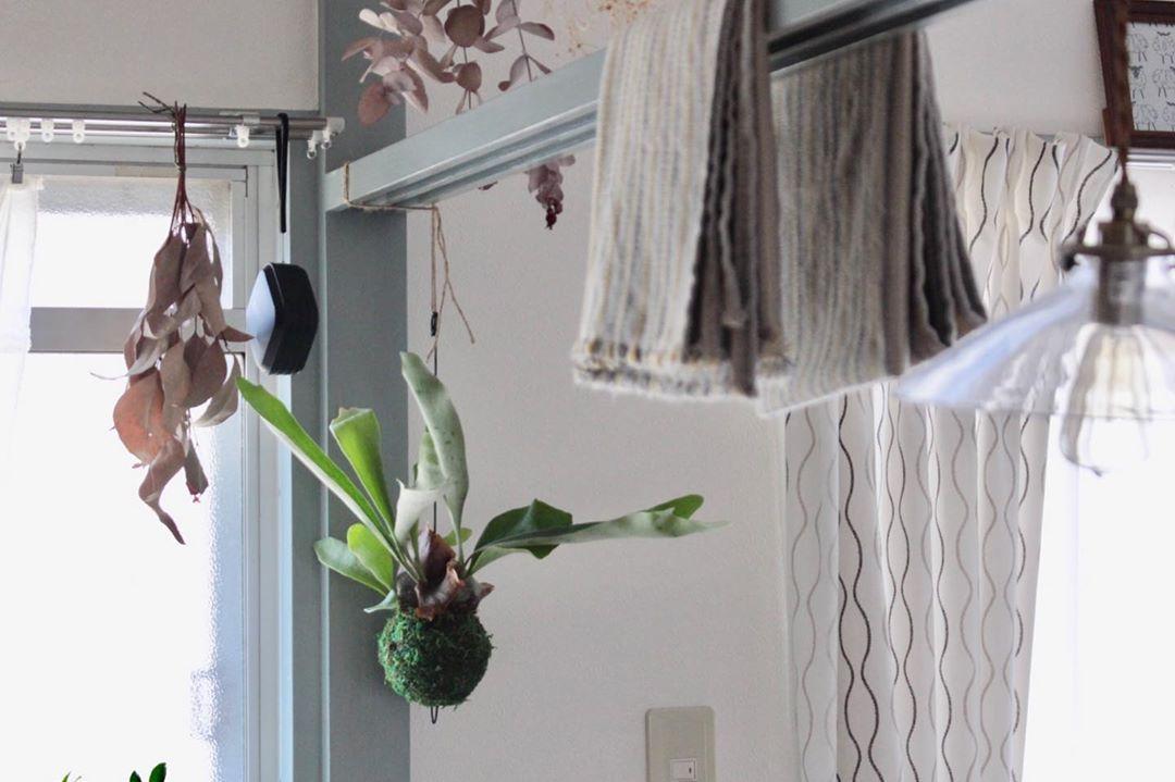 和のテイストが残る鴨居部分も、植物を吊り下げたり、テーブルクロスをかけたりとうまく活用。