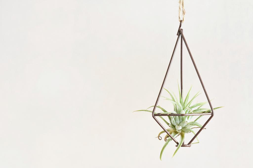 一番手軽な方法は、ワイヤーフレームの中に入れて飾ること。風通し良く飾ることが出来るので、エアプランツを育てる際にはおすすめの方法です。