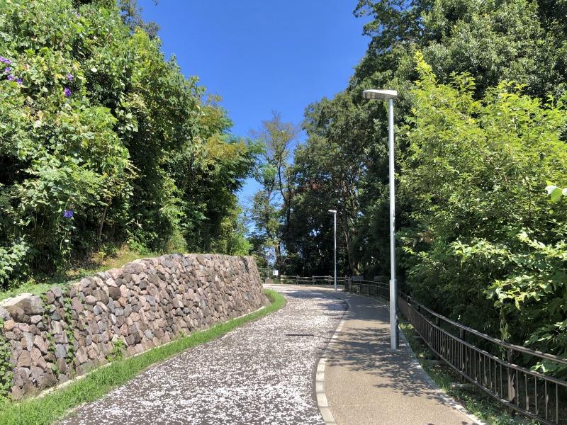 写真では緑が生い茂っていますが、春には桜が咲き誇り、お散歩コースにちょうどいいんですよ。