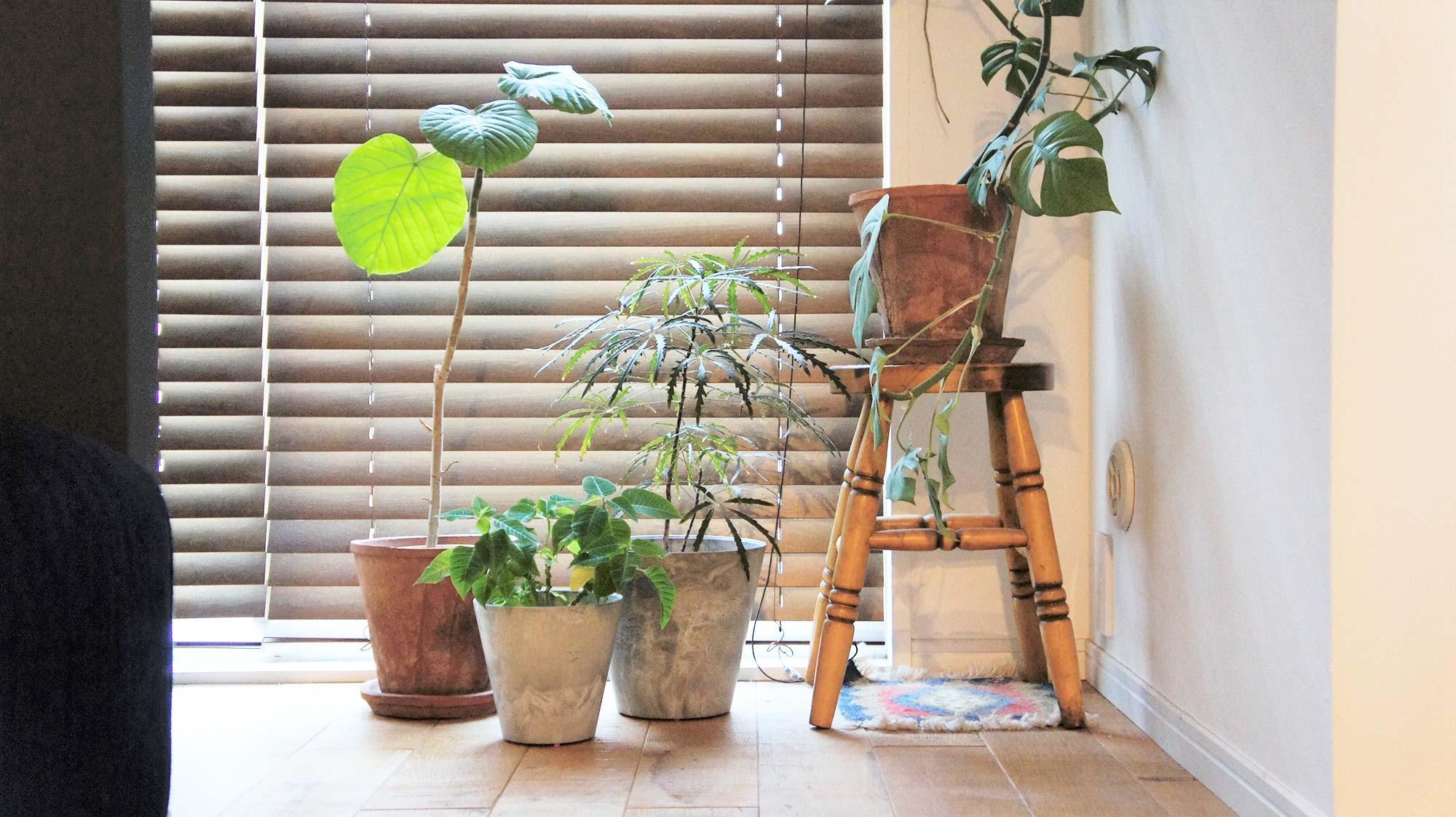 重厚感のある見た目と水分コントロールが魅力的な amabroの軽量植木鉢「ART STONE」