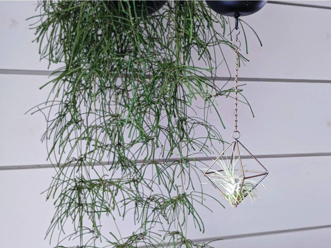 お家で過ごす時間が増えたこともあり、室内の環境を充実させようと、グリーンもだんだん増えました。お花、植物の面倒を見るのが楽しみになってきたそう。